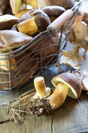 wild mushrooms: Basket full of wild mushrooms