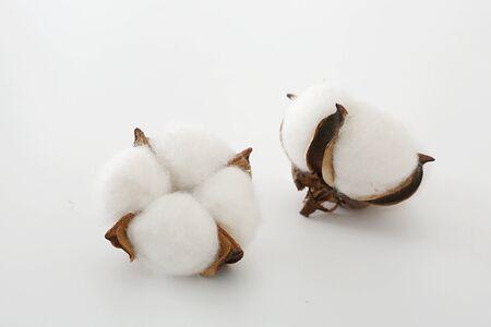 Baumwolle auf weißem Hintergrund