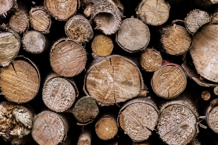 cut firewood stacked for drying outdoors photo