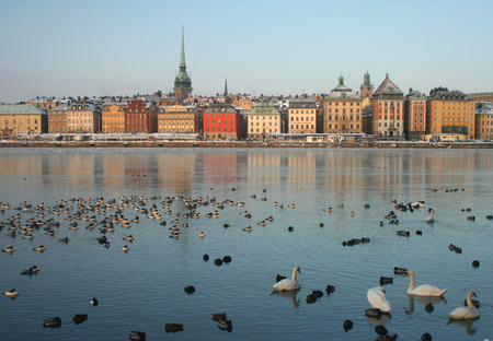 Waterfowl in the front of of Stockholm's Old town, Gamla Stan, in winter morning. Stock Photo