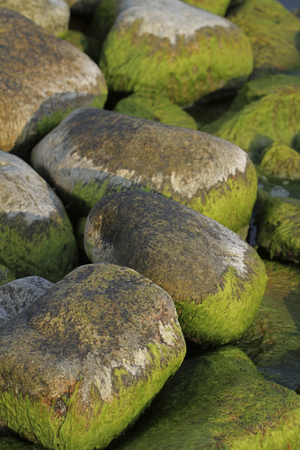 Cladophora glomerata green algae on rocky shore of Baltic Sea in Eastern Gulf of Finland National Park, in Finland. Stock Photo