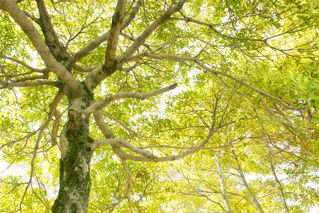 緑の輝き 写真素材