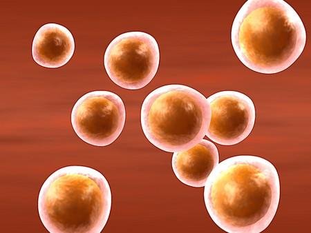 cartoon representing a group of the female reproductive cells (oocytes) Banco de Imagens - 4413475