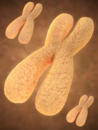 中期の染色体の功妙な印象
