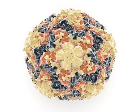 共通の季節の風邪のような呼吸器疾患を原因となるピコルナ ウイルスの会員であるライノ ウイルスの構造を示す図
