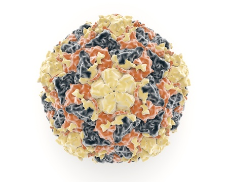 virology: Illustration showing the structure of the rhinovirus which is a member of the picornaviruses which causes diseases of the respiratory tract like the common seasonal cold