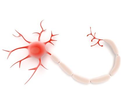Ilustración de una célula de la neurona o nervio de la Sytem nervioso central que muestra el cuerpo celular o soma, dendritas y el axón que actúan como conductores y los receptores en la transmisión de señales