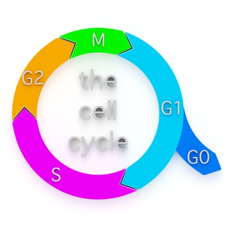Diagram showing the sequential phases of the Cell Cycle, or cell-division cycle, during which an eukaryotic cell duplicates and replicates itself by division into daughter cells