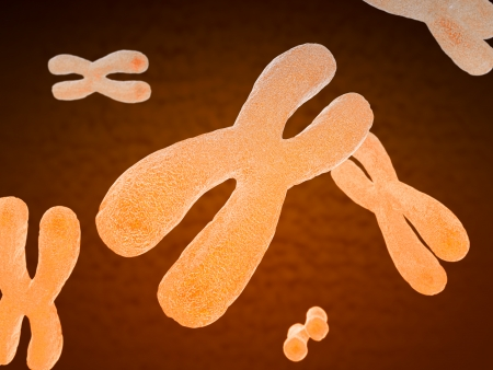 sex chromosomes: Paired human chromosomes composed of DNA, or deoxyribonucleic acid, which contains a sequence of genes responsible for hereditary characteristics and sex