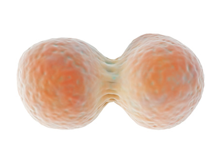 3d illustration depicting cell division, a process whereby a cell divides into two new daughter cells with the same genetic material during growth or reproduction