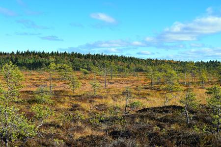 bog: Bog Torronsuo, Finland.