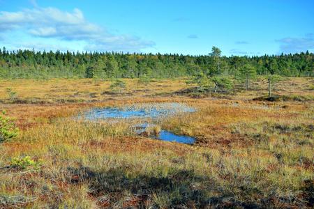 quagmire: Beautiful autumnal bog landscape, Torronsuo National Park, Finland Stock Photo