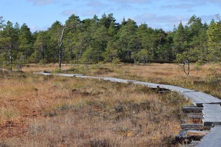 bog: Duckboards on bog. Stock Photo
