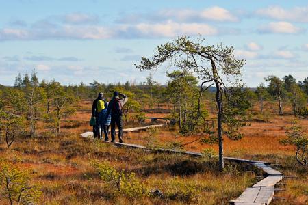 bog: Hiking on a colorful autumn bog.