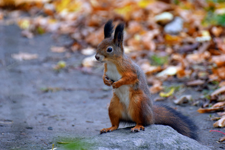 standing stone: Squirrel standing on stone. Stock Photo
