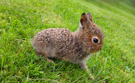 Tiny hare standing still on grass