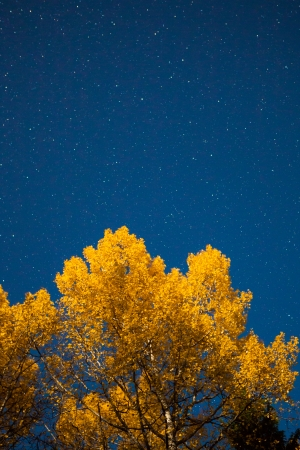Yellow tree and starry sky at autumn night photo