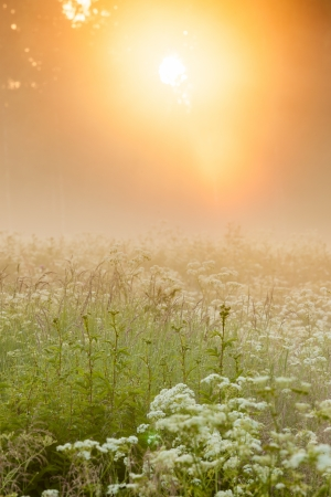 Golden light shine through forest in to foggy meadow photo