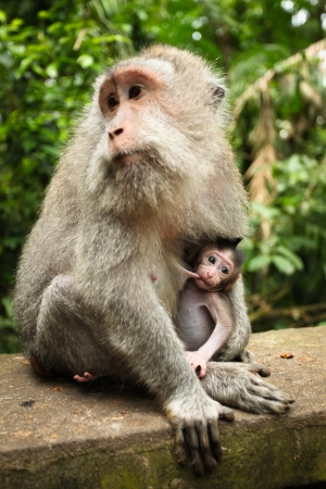 Breastfeeding monkey photo