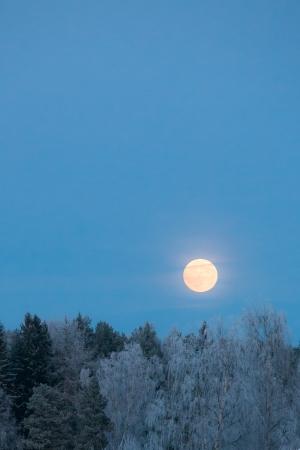 Volle maan over vorst bedekt bos Stockfoto