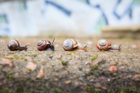 Groep van kleine slakken gaan vooruit Stockfoto