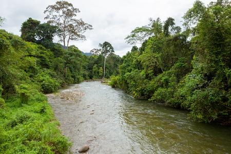 Jungle river in borneo photo