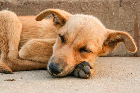 Jonge verdwaalde hond slapen op bestrating in India Stockfoto