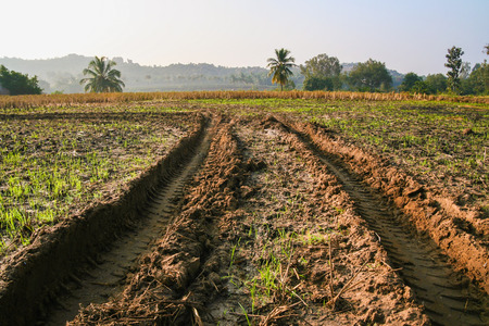 muddy tracks: Tractor tracks in muddy field Stock Photo