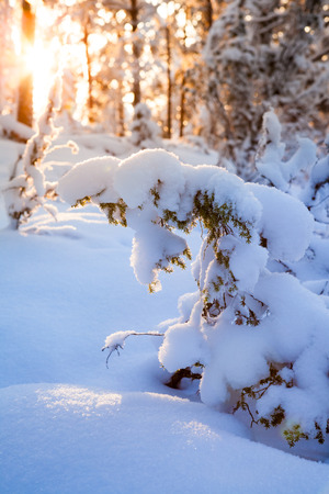 Sunshine in snow covered forest Stock Photo