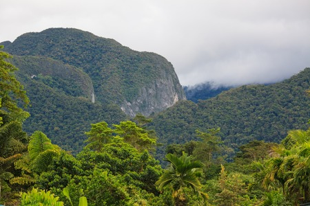rainforest background: Exotic rainforest landscape Stock Photo