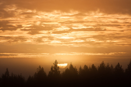 Zonsopgang boven bos