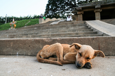 Young stray dog sleeping Banque d'images
