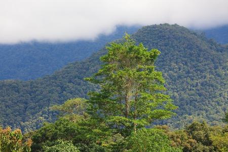 Exotic rainforest landscape photo