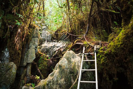 Pinnacles trek in gunung mulu national park