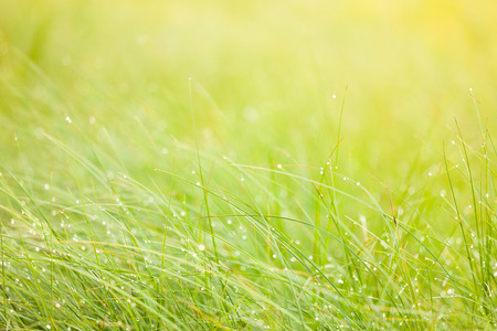 moisture: Abstract moisture grass background