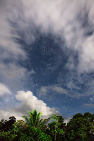 treetops: Rainforest treetops and starry sky