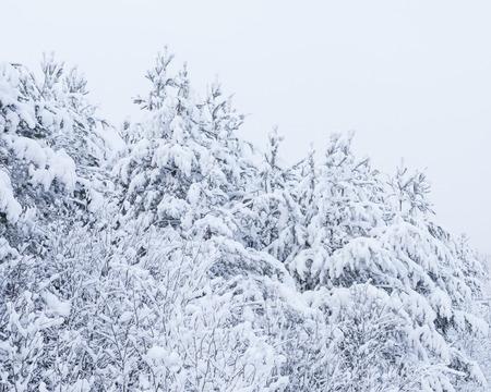 snowbanks: Snow landscape and road