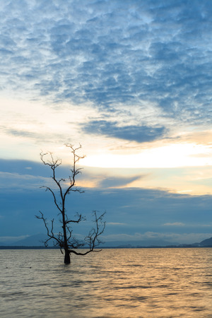afloat: Lonely tree in water at sunset Stock Photo