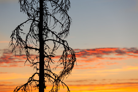 Sunset sky and tree silhouette photo