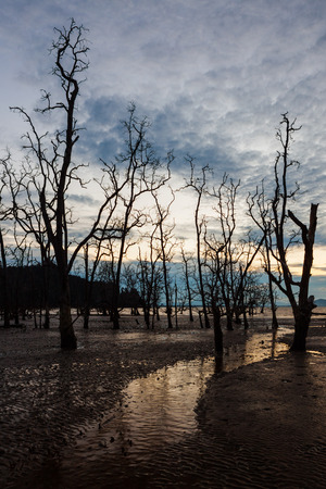 muddy: Dead forest at muddy beach at twilight