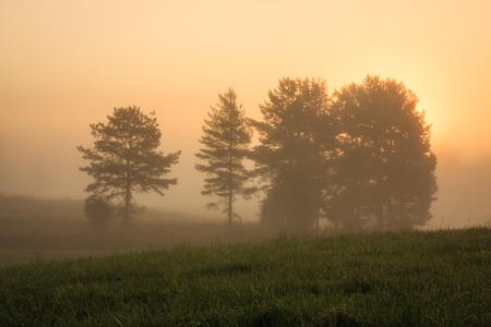 Sunrise at foggy meadow