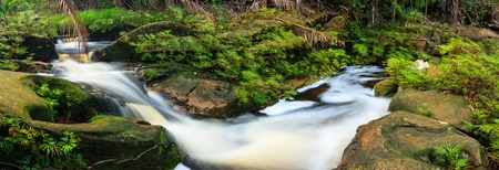 Small stream in rainforest panorama