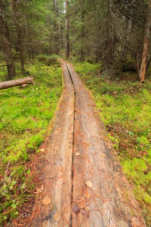 duckboards: Duckboards in forest finland