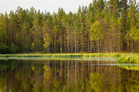 Serene sunny morning forest reflection in finland Stock Photo - 42101473