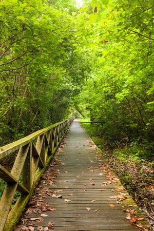 dense: Boardwalk in dense rainforest in niah cave malaysia borneo Stock Photo