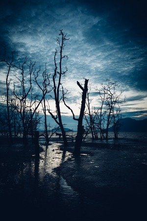 muddy: Muddy beach and dead forest at twilight