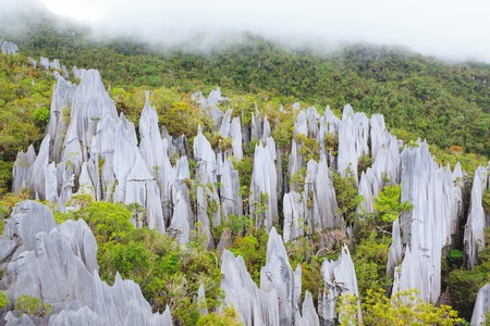 limestone pinnacles formation at gunung mulu national park borneo malaysia Stock Photo