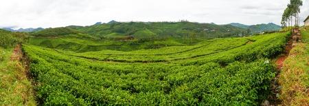 tea plantations: Tea plantations at munnar india on a cloudy day panorama Stock Photo