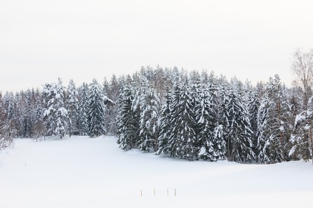 snow covered forest: Snow covered forest and field overcast day finland winter Stock Photo