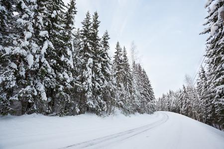 clima: Camino nevado en bosque en invierno Foto de archivo